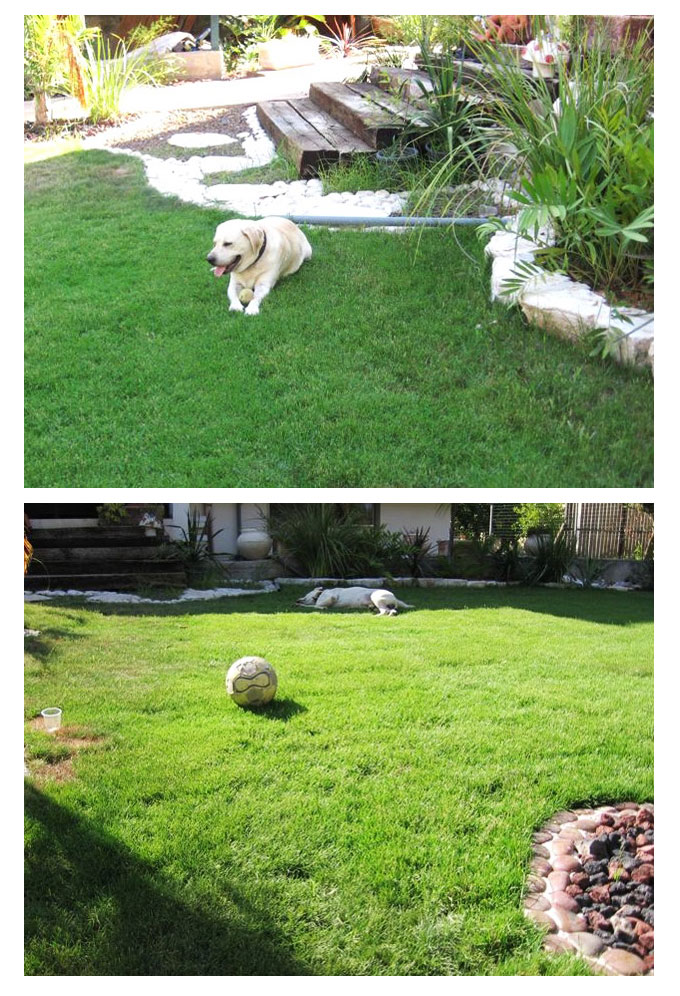 דשא פספלום, גינות מדשא פספלום, דשא פסלום מחיר,