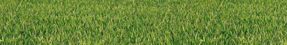 דשא אלטורו, דשא זויסיה אלטורו