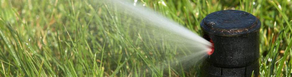 הנחיות השקיה לדשא מוכן, השקיית דשא,השקיית מרבדי דשא
