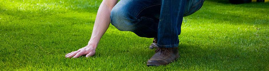 הנחיות לטיפול במזיקים, מזיקי דשט, טיפול במזיקי דשא