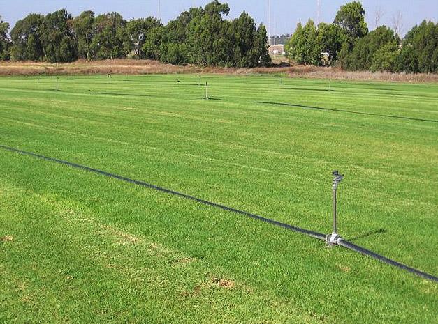 משהו רציני דשא מוכן - קיקויו (קוקויה) | דשא מוכן ומרבדי דשא לפרטיים, לעסקים NY-01