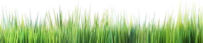 דשא מוכן, מרבדי דשא, דשא, דשא אלימלך