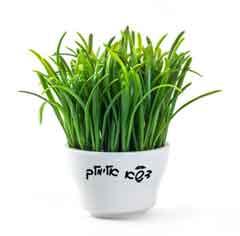 דשא, דשא מוכן, מרבדי דשא, דשא אלימלך